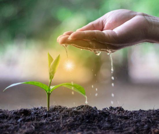 main qui verse de l'eau sur un semis